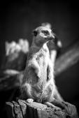 zoo_h (10 von 29)