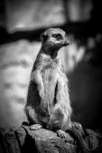 zoo_h (11 von 29)
