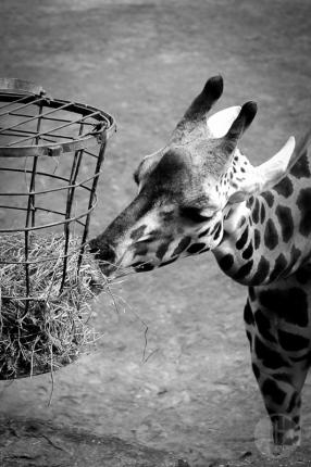 zoo_h (18 von 29)