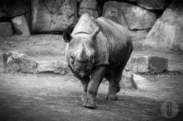 zoo_h (19 von 29)