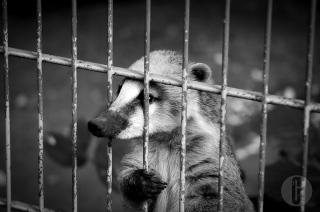 zoo_h (22 von 29)
