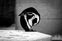 zoo_h (25 von 29)
