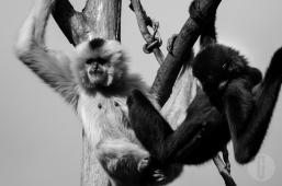 zoo_h (28 von 29)
