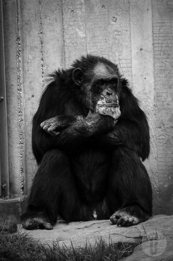 zoo_h (29 von 29)