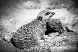 zoo_h (7 von 29)