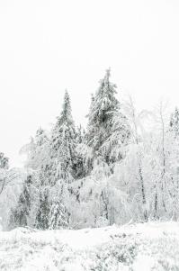 schnee (14 von 38)
