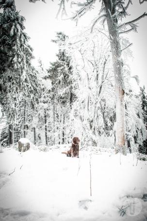 schnee (15 von 38)