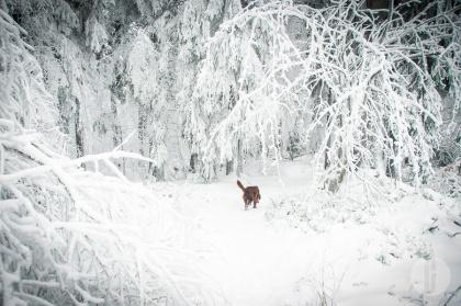 schnee (16 von 38)