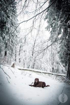 schnee (17 von 38)