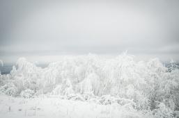schnee (28 von 38)