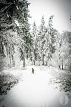 schnee (7 von 38)