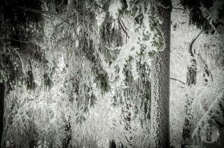 schnee (8 von 38)