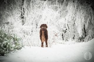 schnee (9 von 38)