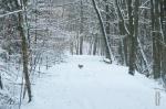 schnee (4 von 26)